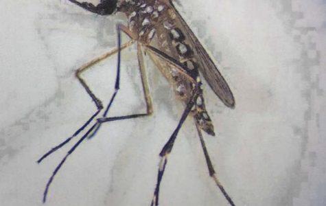 Alumni, Breeds mosquitoes?