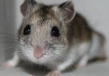 Adorable Low Maintenance Pets: Hamsters