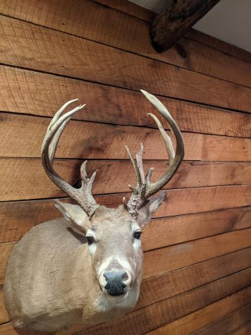 How Antlers Change in Buck From Year to Year