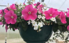 Horticulture Class Plant Sale This Week